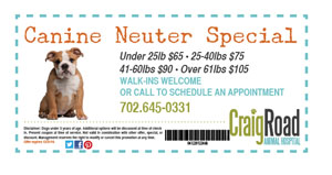 Canine Neuter Special