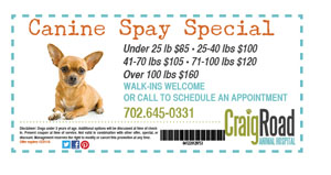 Canine Spay Special