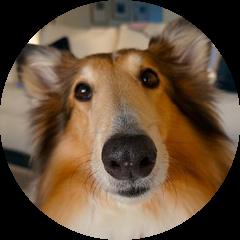 Craig Road Animal Hospital – Full Service Animal Hospital in